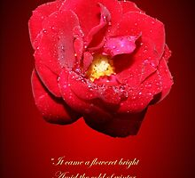 Lo how a rose e'er blooming by patjila