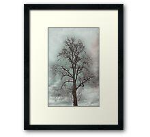 Bare Beauty of Winter Framed Print