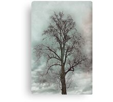 Bare Beauty of Winter Canvas Print