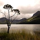 The Tree at Buttermere by Gary Tumilty