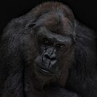 I'll never gonna be a silverback by Jo-PinX