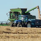 Harvesting wheat by woolleyfir