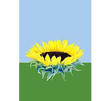 Floating Sunflower Photographic Print
