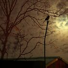 full moon by KimberlyClark