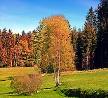 Tree in springtime scenery   landscape photography by Patrick Jobst