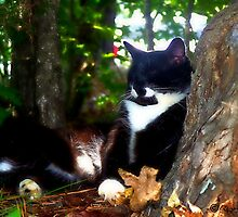 Resting in the Shade by Lisa Taylor