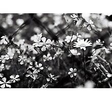 Laisy Photographic Print
