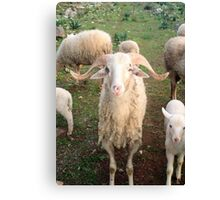 A Flock Of Sheep In A Rural Setting Canvas Print