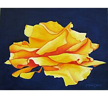 A Perfect Yellow Rose Photographic Print