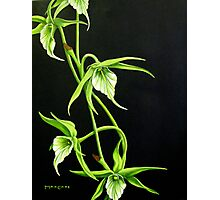 Night Orchids Photographic Print