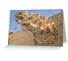 Chameleon: Brown Bradypodion Greeting Card