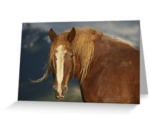 Tatanka Spirit  Greeting Card