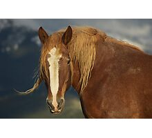 Tatanka Spirit  Photographic Print
