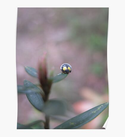 Little Beetle Looking At Us Poster
