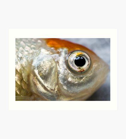 Fisheye Lens Art Print