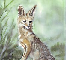 Black-backed Jackal (Canis mesomelas) by Maree  Clarkson