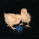 Chicks by S0rcy