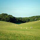 Sheep Valley by Bradley Old