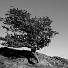 Wind Swept Tree on Snowdonia Hillside by JMChown