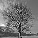 Tree at Howe Wood by JMChown
