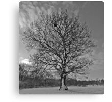 Tree at Howe Wood Canvas Print