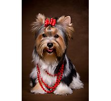 Yorkshire terrier puppy Photographic Print