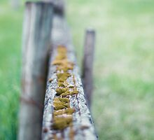focal fencing by Jason Nicholls