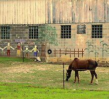 a horse in front of barn by Lynne Prestebak