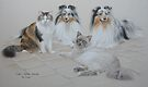 Shelties and Moggies by Heidi Schwandt Garner