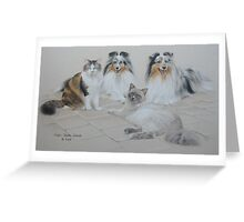 Shelties and Moggies Greeting Card