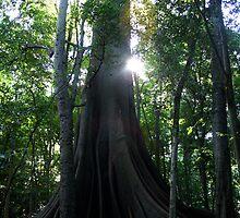 Tree by Jodie Bennett