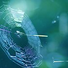 Spiderweb by mariette sardin