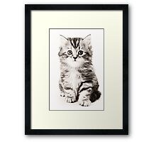 Fluffy kitten black and white photo Framed Print