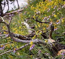 Wild Flowers and Dead Wood by photodivaanna