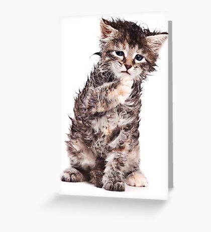 wet kitten Greeting Card