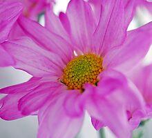 Satin Daisies by Renee Hubbard Fine Art Photography