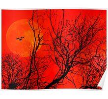 Tangerine Dream. Poster