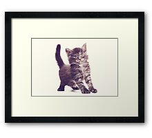 fluffy kitten Framed Print