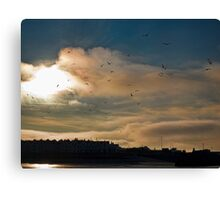 Flocking Seagulls!  Canvas Print