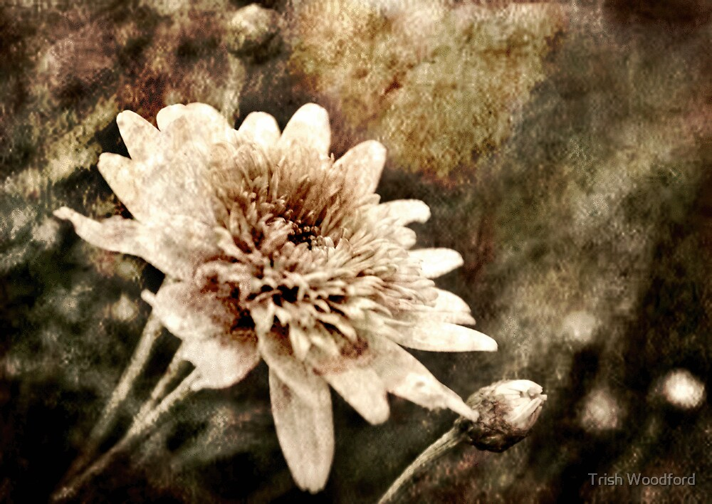 Flower Grunge by Trish Woodford