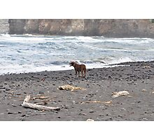 dog on beach Photographic Print