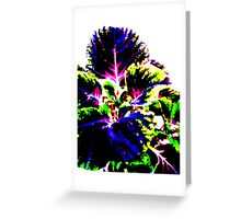 Coloured Foliage Greeting Card