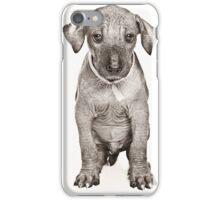 Hairless Dog puppy iPhone Case/Skin