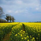 Fields of Yellow by Jim Dempsey
