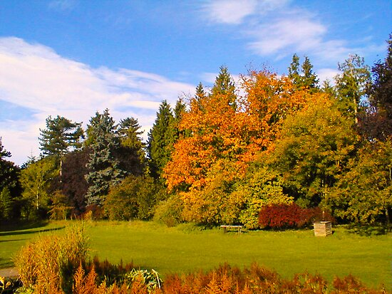 The Colours of Autumn by Trevor Kersley