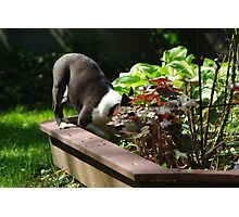 Digging in the flower bed?  No, not me! Photographic Print