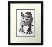 silver kitten meows Framed Print