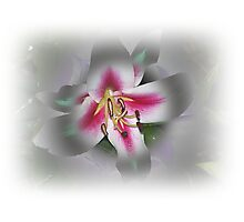 Macro Middle Of Lily Photographic Print