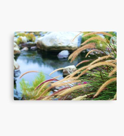 Breezy fountain grass Canvas Print