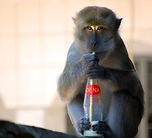 Mr. Monkey  by Charuhas  Images